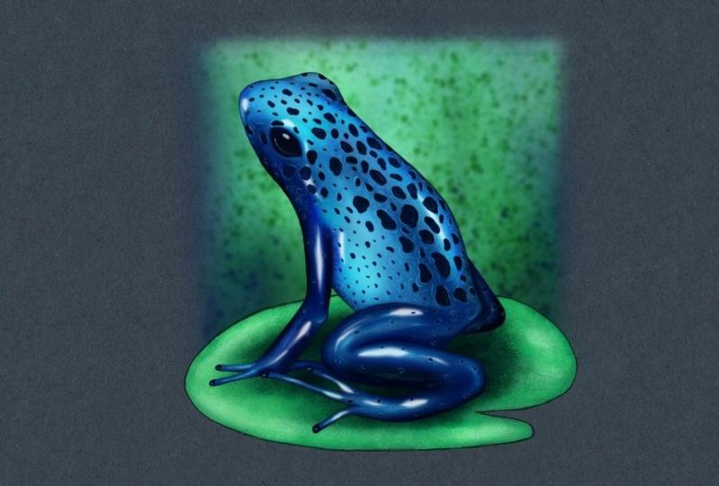 Frog in Procreate