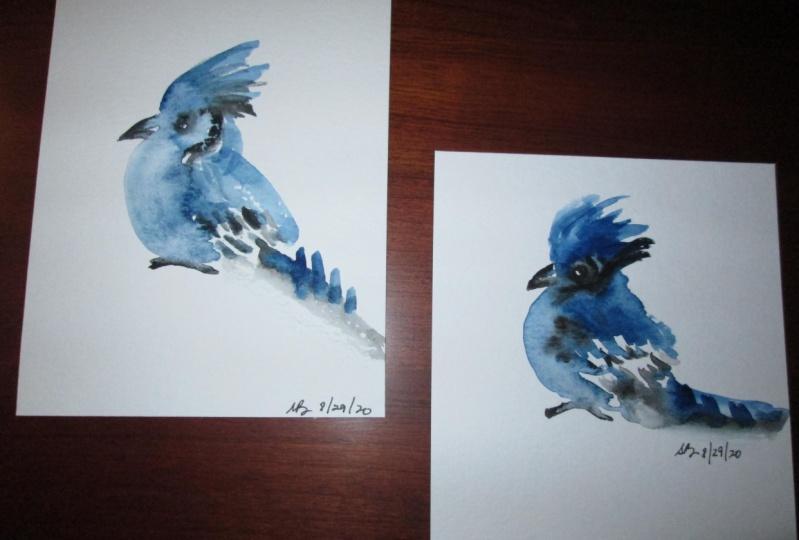 Loose Blue Jays
