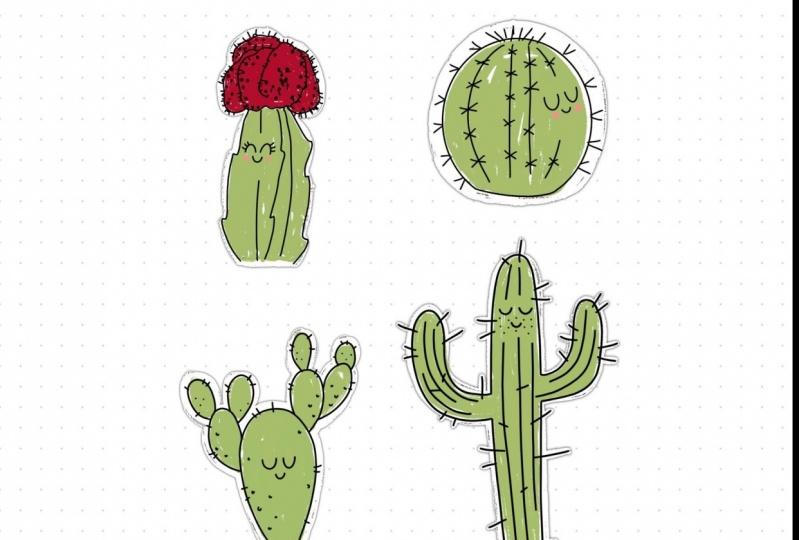 Cute Cacti!