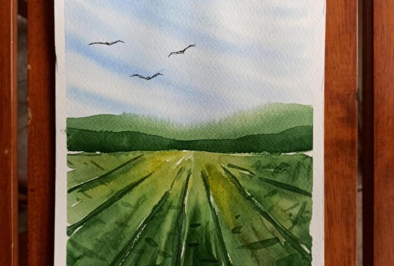 Fields Expressive Landscape