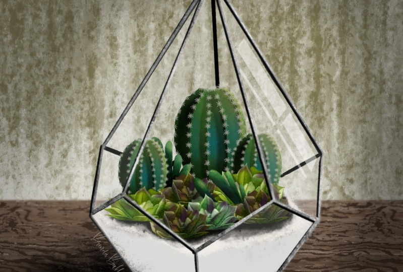 Glass pyramid with cacti and succulents