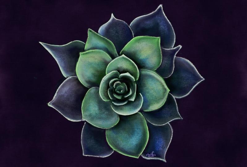My pastel succulent
