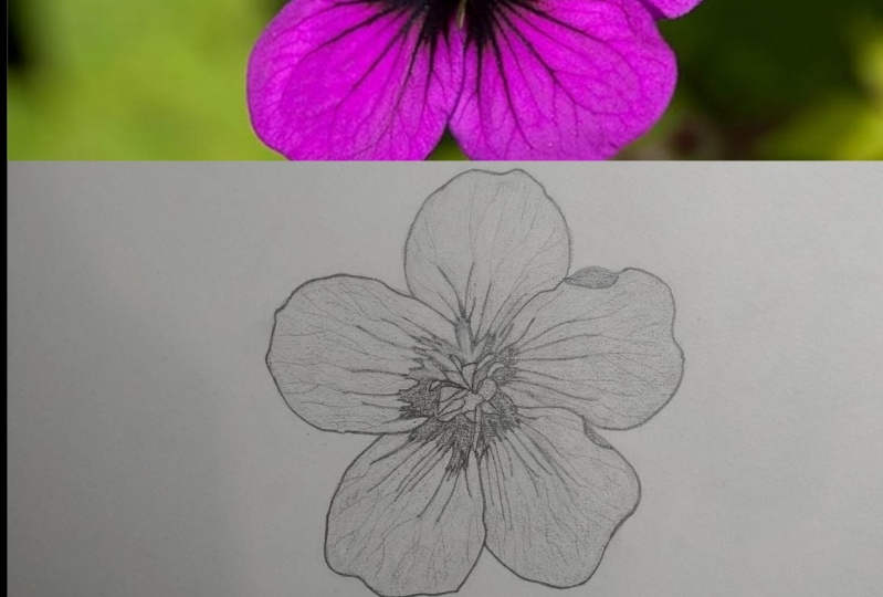 My Flower Drawing (pencil)
