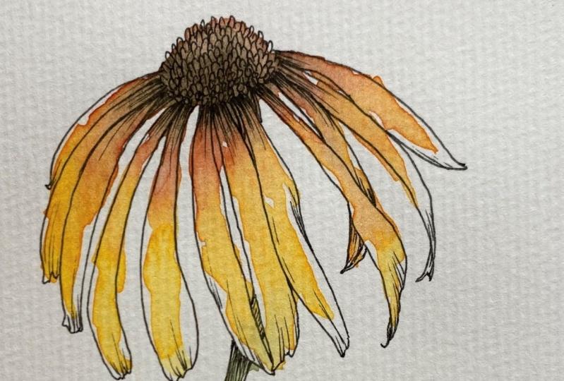 Exploring Loose Ink & Watercolor