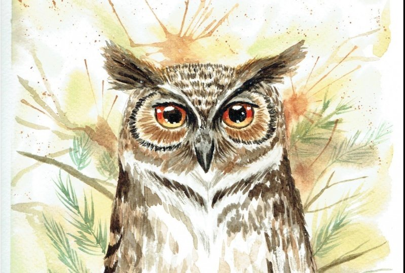 Great Horned owl - class project