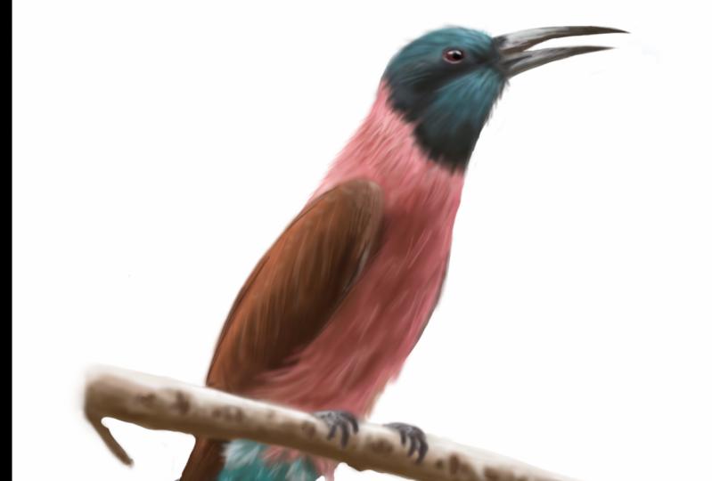 Project 2 - Bird