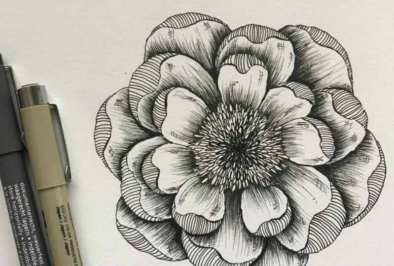 Peony drawing