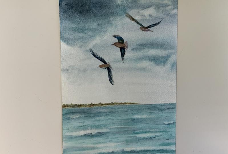 Seagulls by klein