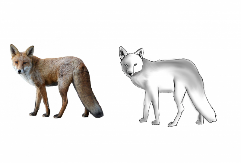 Fox reference drawing.(I am 10 years old and want to learn how to draw )