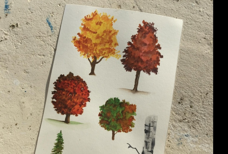 Trees with Zaneena