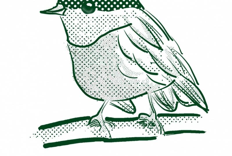 Bird lineart