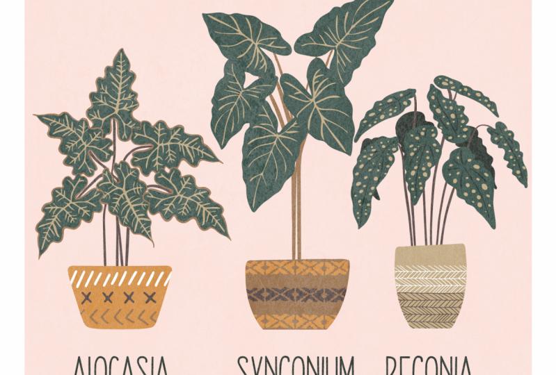 Plants illustrator iPad