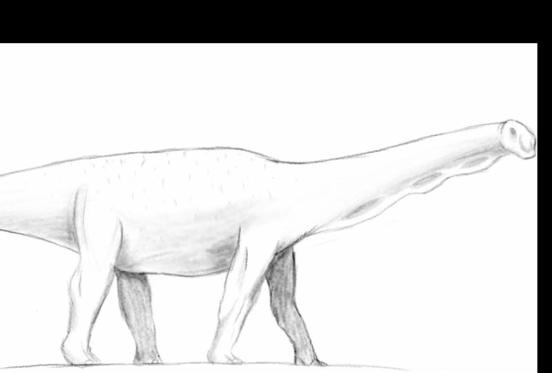 Sauropod Drawing