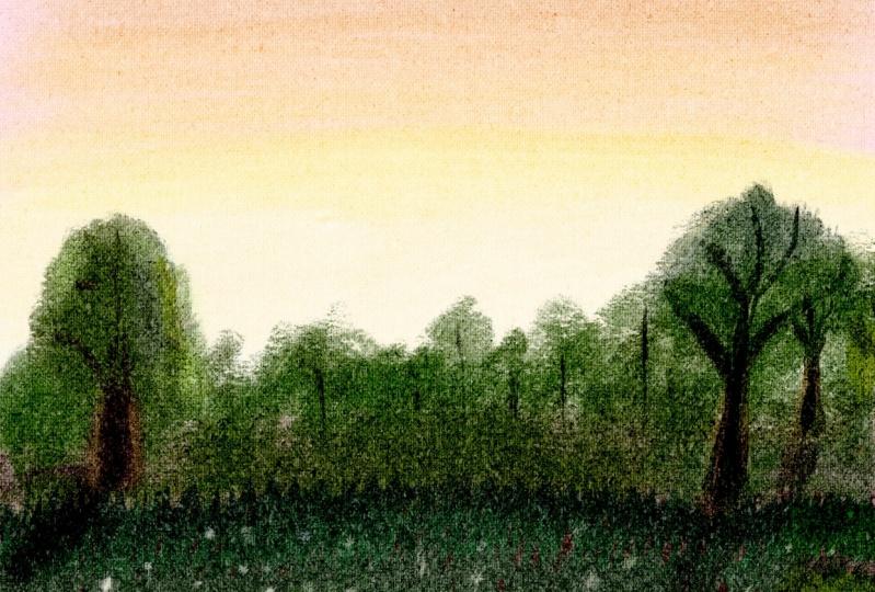 Dandelion pappi at Sunset
