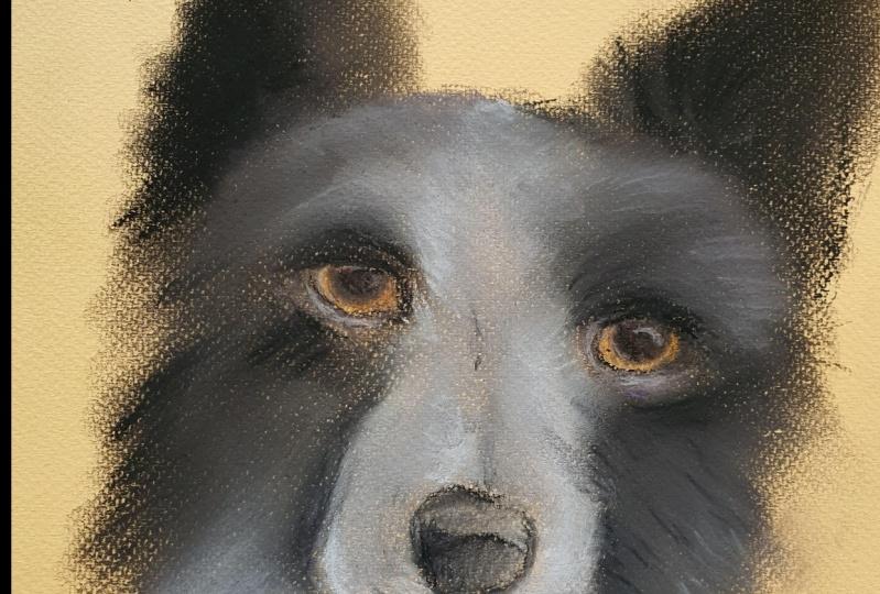 Soft Pastel Dog