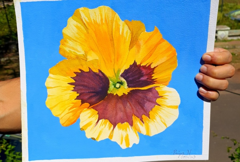Yellow Pansy with Gouache Backdrop