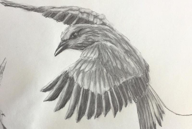 Bird Pencil Drawing