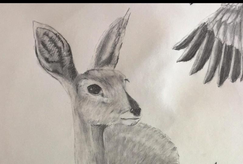 Impala Pencil Drawing