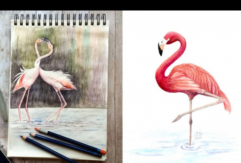 Project Flamingo