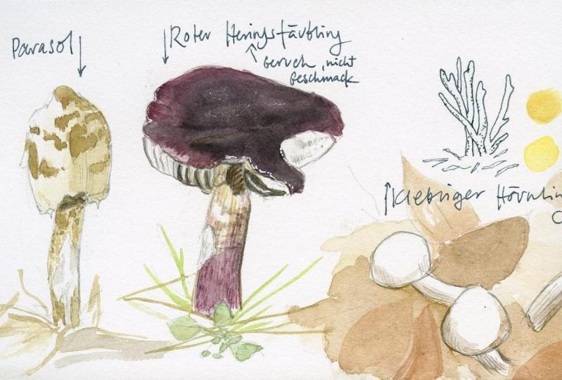 Sketching mushrooms!