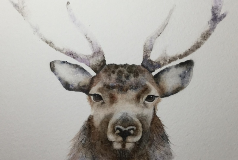Festive Stag
