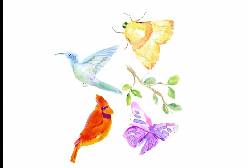 Wings, Feathers and Leaves