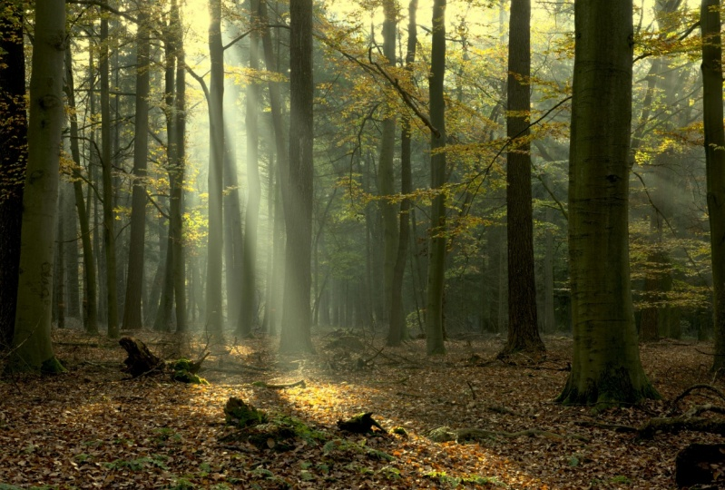 Nature Photography: Forest