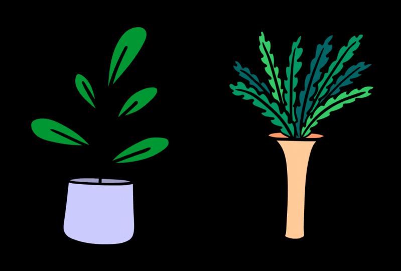 Plants Morph