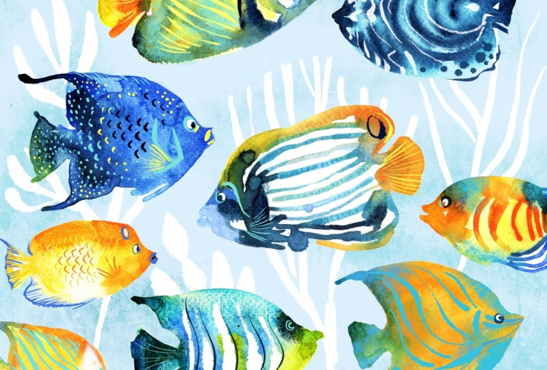 Angelfish in watercolour & Procreate