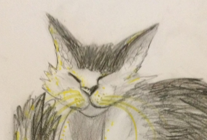 Expressive Drawing - Old Cat