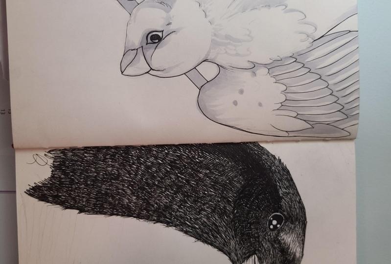Crow an sparrow