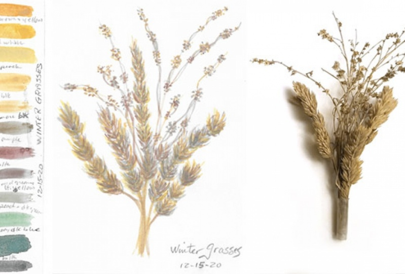 Winter skies and grasses