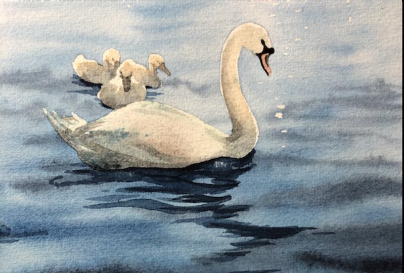 Swan Lake Adventure