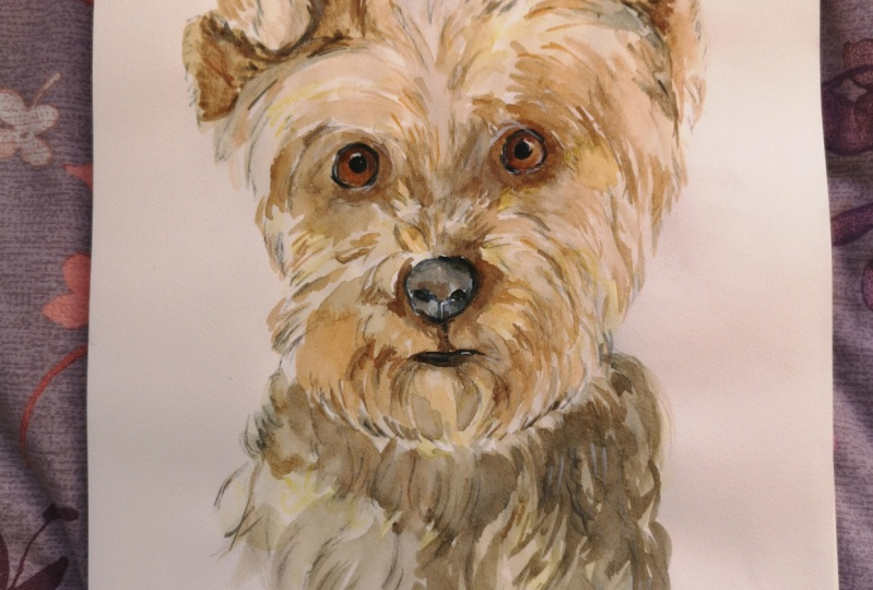 Painting a Yorkie