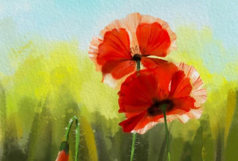 Digital watercolor poppies