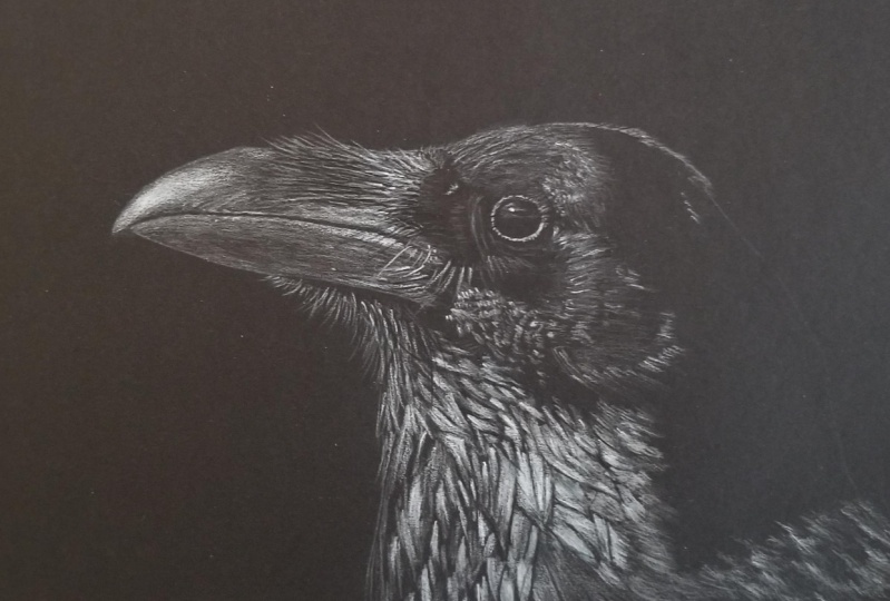 Crow with white on black