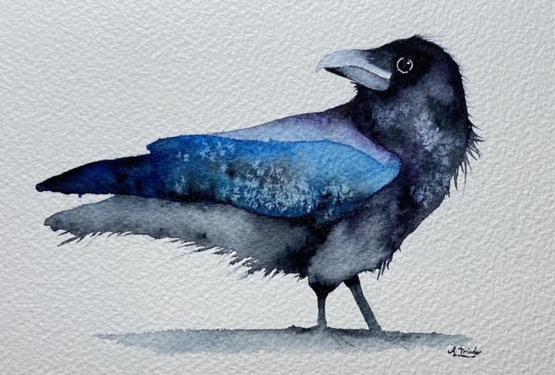 Free-flow Raven