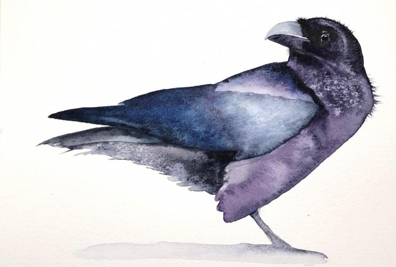 Riveting Raven