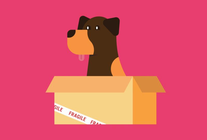 Doberman in a Box