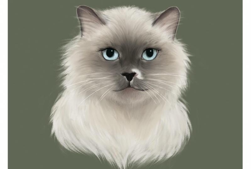 My cat Nisset