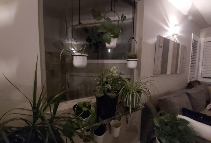 My new plant wall