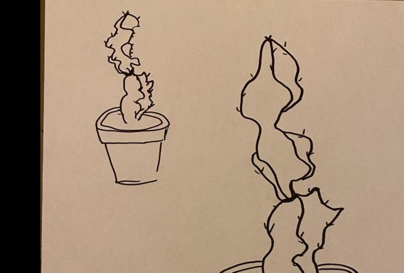 my cactus vision