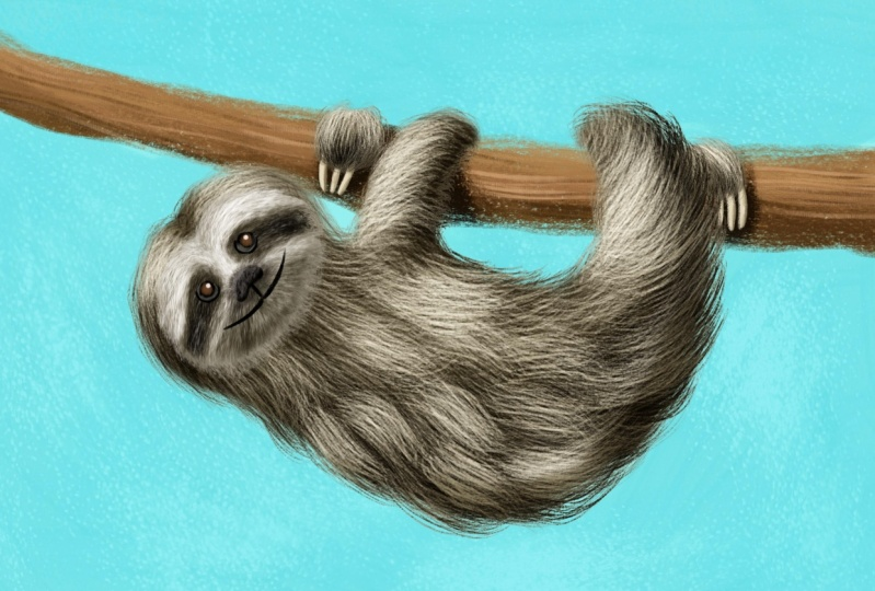 Furry Animal Illustrations!