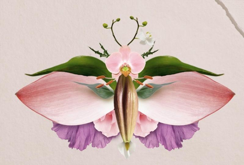 "Digital collage series 1 ""Botanical creatures"" Photoshop illustration with natur"