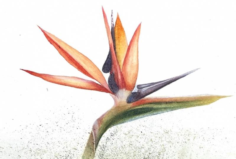 Watercolor or acrylic OMGoodness