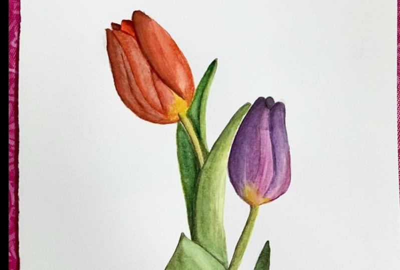 Beginner Tulips