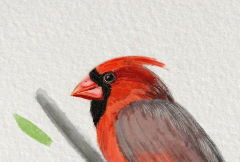 Red Cardinal Watercolour
