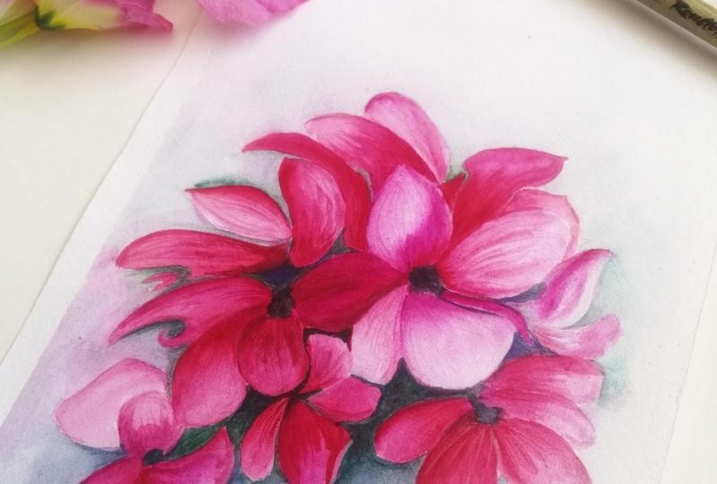 Watercolor flowers - cyclamen