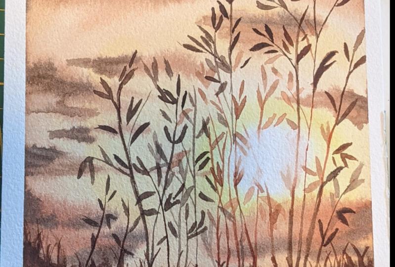 Open field sunset