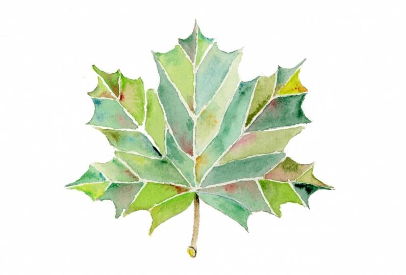 Maple Leaf + Sunflower + Hibiscus